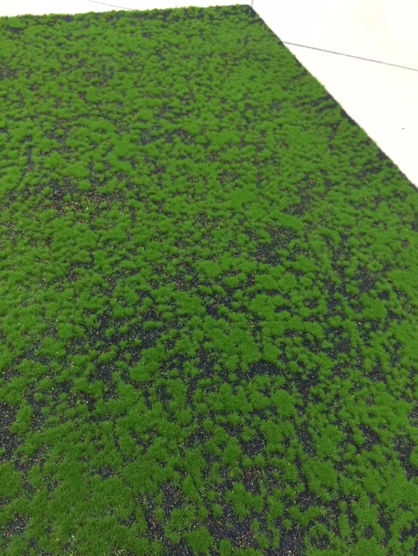 绿植墙安装